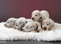 Photo Impressions of 3rd week Christi ORMOND W - Litter