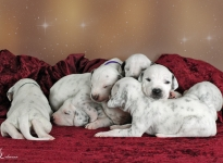 Photo Impressions of 2nd week Christi ORMOND V - Litter