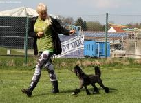 Fotoimpressionen 12. Dog Handling Seminar