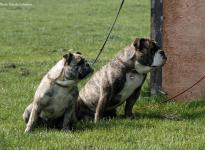 Fotoimpressionen 6. Dog Training Seminar