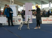International Dog Show in Tulln - Austria