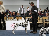 Bundessieger Dog Show in Dortmund - Germany