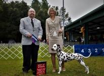 AKC Dog Show in Ocala - Amerika