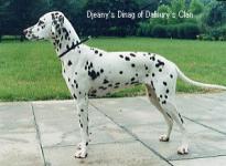 Djeany's Dinag of Dalbury's Clan