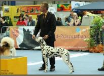 Presentation of male Christi ORMOND Exquisite Selection International Show in Oldenburg 2009 - Ring of Honor