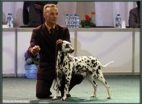 Presentation of female Quality Queen vom Teutoburger Wald World Dog Show in Bratislava - Slovakia 2009 - Puppy Class