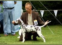 Presentation of male Quiet Quarter vom Teutoburger Wald Regional Show Büren 2009 - Puppy class