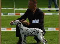 Präsentation der Hündin Shining Star vom Teutoburger Wald Regional Ausstellung in Leopoldstal 2010 - Puppyklasse