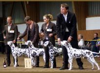 Presentation of Christi ORMOND breeding group Regional Show in Adendorf 2010