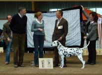 Presentation of male Spotnik `s First Farao For Ormond Regional Show in Adendorf 2010 - Intermediate Class
