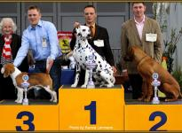 Presentation of male Spotnik `s First Farao For Ormond National Show in Oldenburg 2011 - Ring of Honor