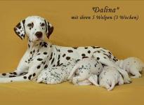 Dalina mit ihrem Christi ORMOND D - Wurf 3. Lebenswoche
