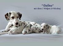 Dalina mit ihrem D - Wurf 4. Lebenswoche