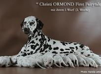 Christi ORMOND First Fairytale with her Christi ORMOND I - Litter 2nd week of life