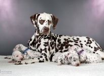 Christi ORMOND Release Me (called Ènia) with her Christi ORMOND AA - Litter 2nd week of life