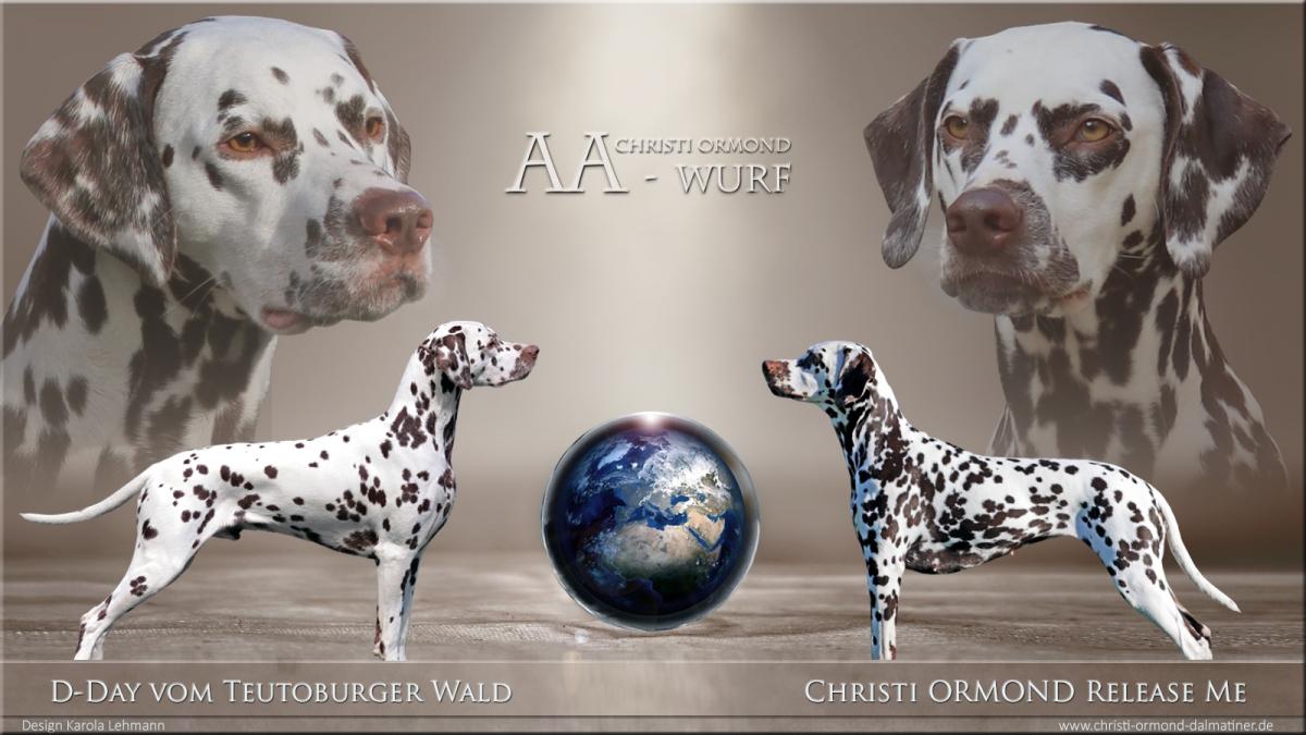 Christi ORMOND AA - Wurf