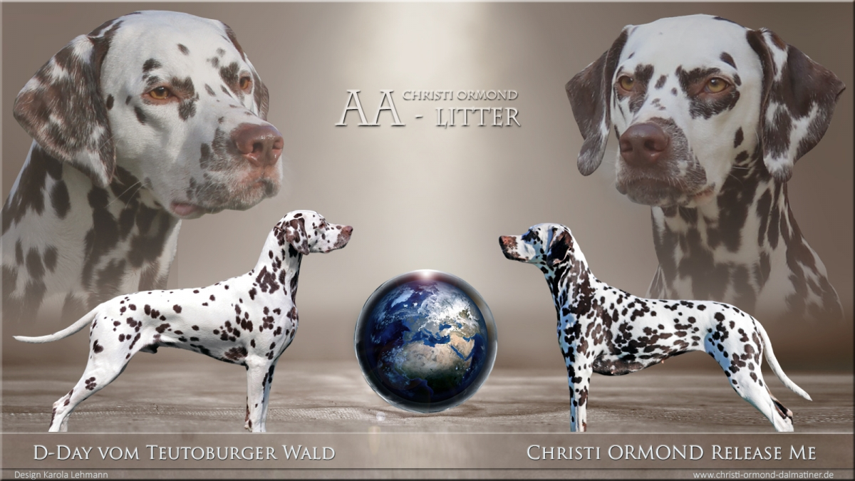 Christi ORMOND AA - Litter
